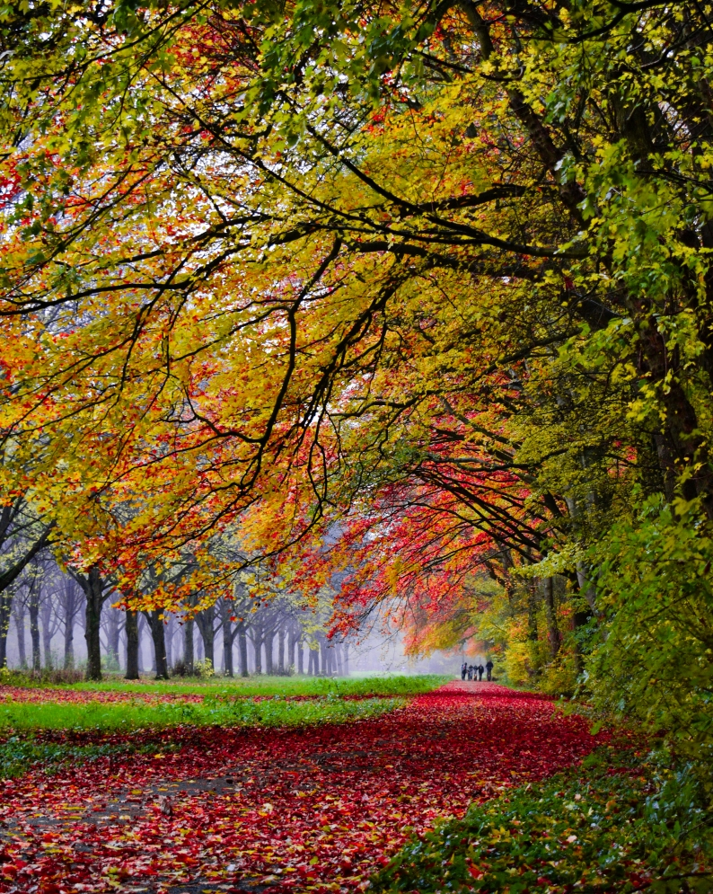 The autumn in Amsterdamse Bos is very colorful